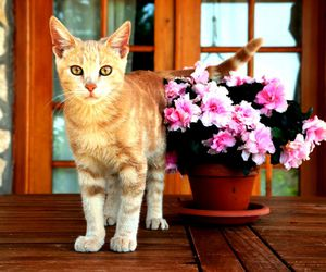 cat, colur ​, and flowers image