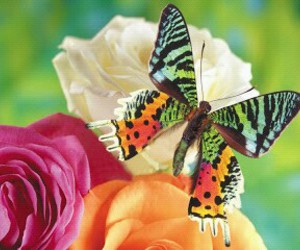 butterfly, pretty, and flowers image