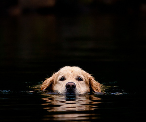 dog, animal, and water image