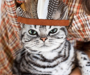 cat, indian, and animal image