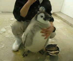 penguin, animal, and funny image