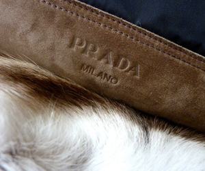 Prada, milano, and luxury image