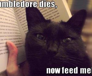 cat, harry potter, and dumbledore image