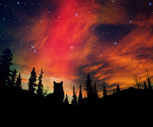 sky, wolf, and stars image