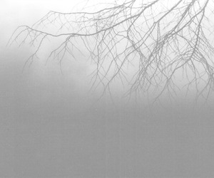 foggy and tree image