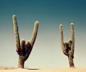 grunge, cactus, and desert image