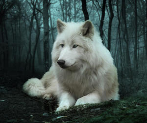 wolf, forest, and white image