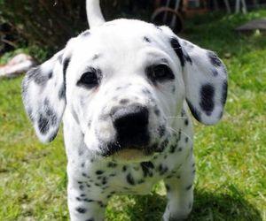 baby, dalmatian, and heart image