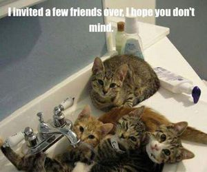 cats, family, and funny image