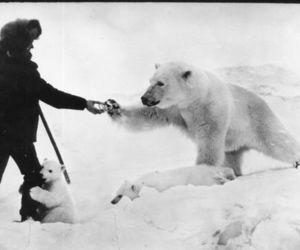 Polar Bear, bear, and snow image