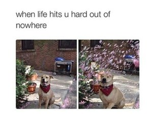 dog, life, and funny image
