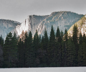mountains, forest, and landscape image
