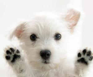 adorable, black and white, and pet image