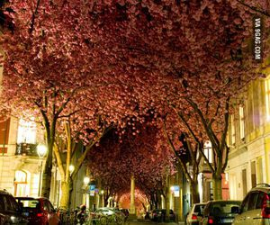flowers, tree, and germany image