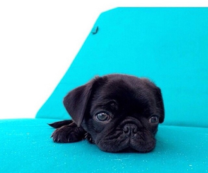 blue, puppy, and cute image