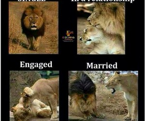 funny, married, and lion image