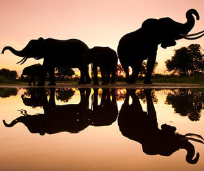 elephant, animal, and sunset image