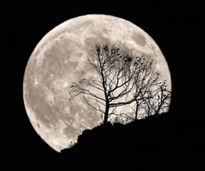beautiful, moon, and night image