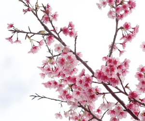 pink, beautiful, and blossom image