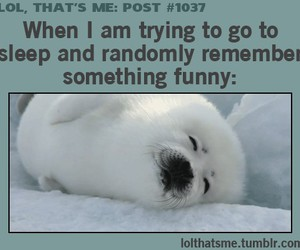 funny, lol, and sleep image