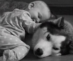 adorable, baby, and pet image