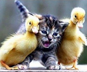 cute, cat, and duck image