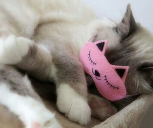 cat, cute, and sleep image