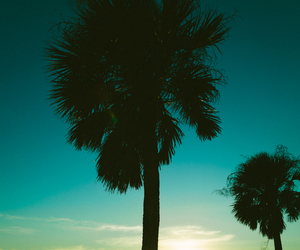 colors, palm, and water image