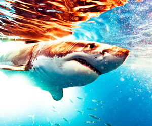 shark and animal image