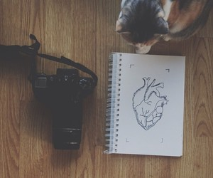 cat, heart, and drawing image