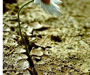 alone, we heart it, and daisy image