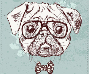 hipster and dog image