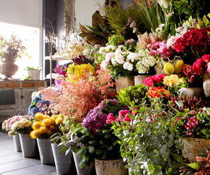 beautiful, color, and florist image