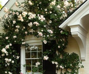 flowers, house, and rose image