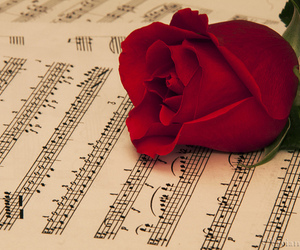 music, photography, and rose image