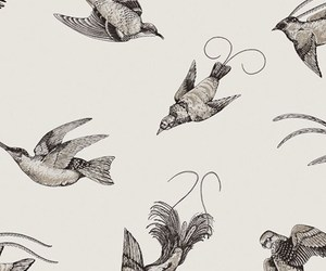 bird, background, and drawing image