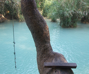 water, summer, and tree image