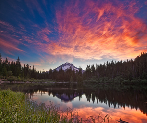 forest, oregon, and sunset image