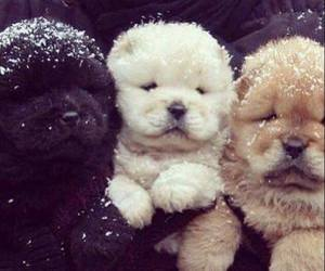 puppies and cuddly. cute image