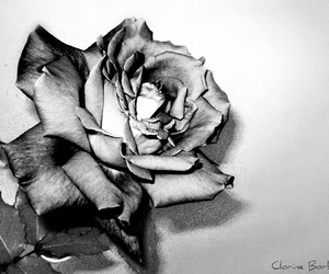 beautiful, bw, and flor image
