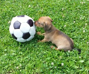 football, so cute, and little baby image