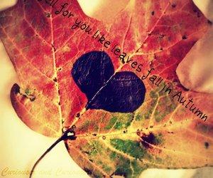 fall, feel, and photo image