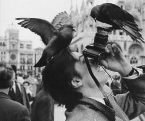 birds, city, and tourist image