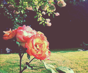 colors, flowers, and garden image