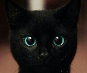 black, cat, and blue eyes image