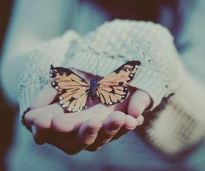 butterfly, vintage, and hands image
