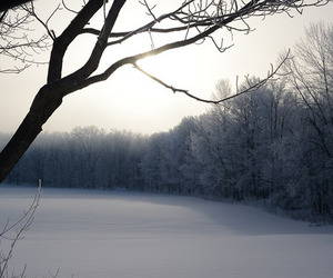cold, forest, and photography image