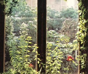 flowers, window, and green image