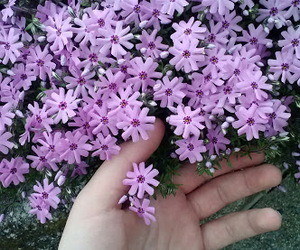 flower, violet, and girly image