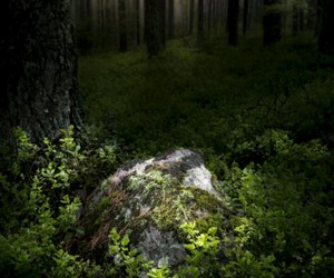 forest, nature, and rock image